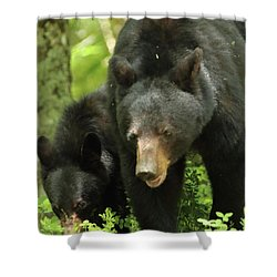 Shower Curtain featuring the photograph Black Bear And Cub On Ground by Coby Cooper