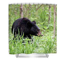Shower Curtain featuring the photograph Black Bear by Andrea Silies