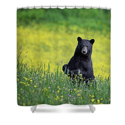 Black Bear Shower Curtain by Bill Wakeley