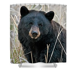 Black Bear Closeup Shower Curtain