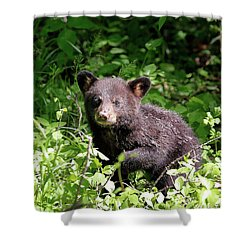 Shower Curtain featuring the photograph Black Bear Cub by Nicholas Blackwell