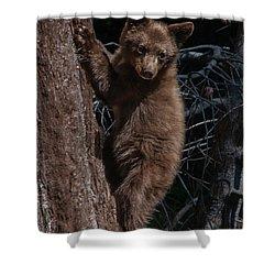 Black Bear Cub Sequoia National Park Shower Curtain
