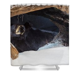 Shower Curtain featuring the digital art Black Bear In Its Winter Den by Chris Flees