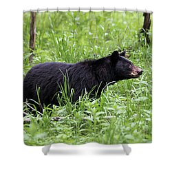Shower Curtain featuring the photograph Black Bear In The Woods by Andrea Silies