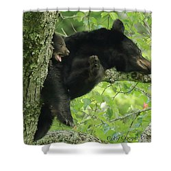 Shower Curtain featuring the photograph Black Bear In Tree With Cub by Coby Cooper