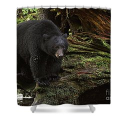 Shower Curtain featuring the photograph Black Bear On Shore by Myrna Bradshaw