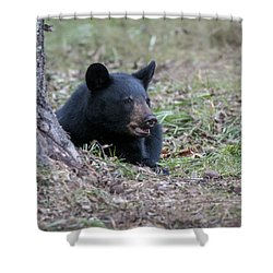 Black Bear Resting Shower Curtain