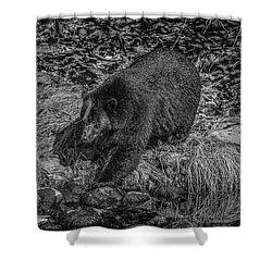 Black Bear Salmon Seeker Shower Curtain