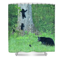 Shower Curtain featuring the photograph Black Bear Sow And Four Cubs by Coby Cooper