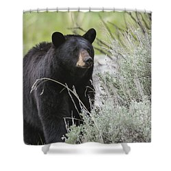 Black Bear Sow Shower Curtain