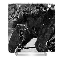 Shower Curtain featuring the photograph Black Beauties by Stuart Turnbull