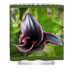 Black Beauty Shower Curtain