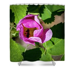 Shower Curtain featuring the photograph Black Bee Collecting Pollen by Darcy Michaelchuk