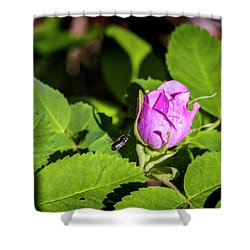 Shower Curtain featuring the photograph Black Bee On Approach by Darcy Michaelchuk
