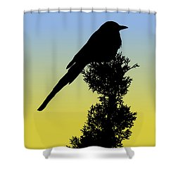 Black-billed Magpie Silhouette At Sunrise Shower Curtain
