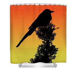 Black-billed Magpie Silhouette At Sunset Shower Curtain