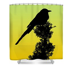 Black-billed Magpie Silhouette - Special Request Background Shower Curtain