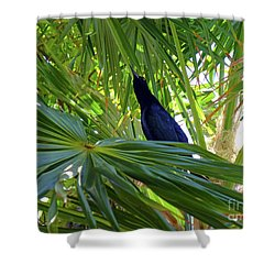 Shower Curtain featuring the photograph Black Bird And Green Leaf by Francesca Mackenney