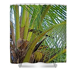 Shower Curtain featuring the photograph Black Bird In Tree by Francesca Mackenney