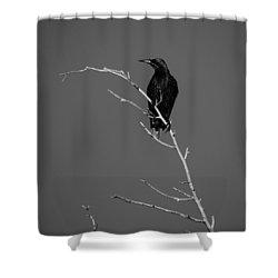 Black Bird On A Branch Shower Curtain