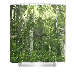 Black Birds And Cyprus Shower Curtain