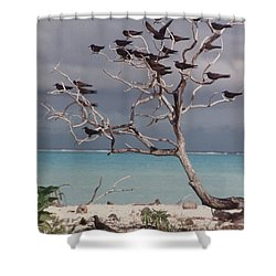 Shower Curtain featuring the photograph Black Birds by Mary-Lee Sanders