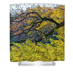 Black Branches Through Bright Autumn Trees Shower Curtain