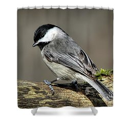 Black-capped Chichadee Shower Curtain