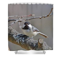 Shower Curtain featuring the photograph Black Capped Chickadee 1109 by Michael Peychich