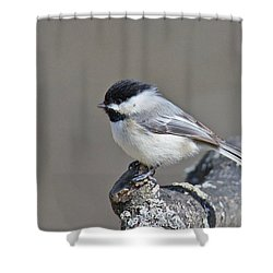 Shower Curtain featuring the photograph Black Capped Chickadee 1128 by Michael Peychich