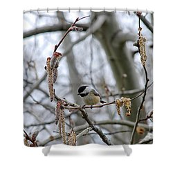 Black-capped Chickadee 20120321_38a Shower Curtain