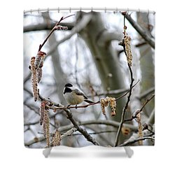 Black-capped Chickadee 20120321_39b Shower Curtain