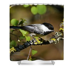 Black-capped Chickadee Shower Curtain by Ben Upham III