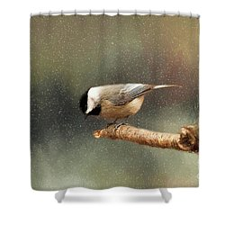 Shower Curtain featuring the photograph Black Capped Chickadee by Darren Fisher