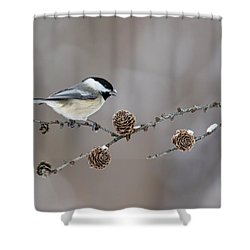 Shower Curtain featuring the photograph Black-capped Chickadee by Mircea Costina Photography