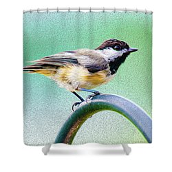 Shower Curtain featuring the mixed media Black-capped Chickadee Oil by Onyonet  Photo Studios