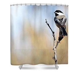 Black-capped Chickadee Shower Curtain by Shevin Childers