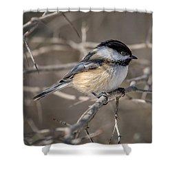 Black-capped Chickadee Iv Shower Curtain