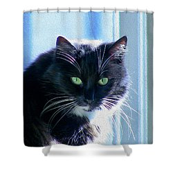 Black Cat In Sun Shower Curtain
