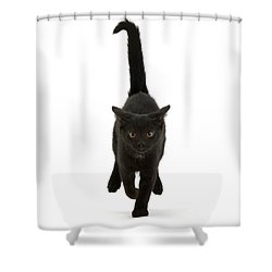 Black Cat On The Run Shower Curtain