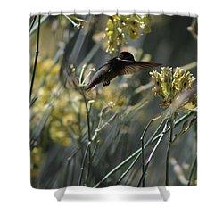Black Chinned Hummingbird In Garden Shower Curtain by Colleen Cornelius