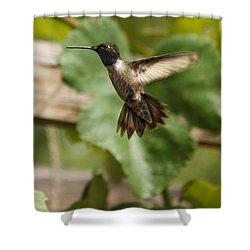 Shower Curtain featuring the photograph Black-chinned Hummingbird by Robert Bales
