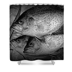 Black Crappie Panfish With Fish Filet Knife In Black And White Shower Curtain
