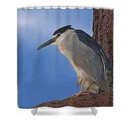 Black-crowned Night Heron Shower Curtain by Brian Cross