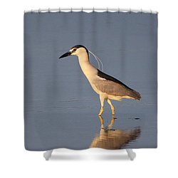 Black Crowned Night Heron Kings Park New York Shower Curtain by Bob Savage