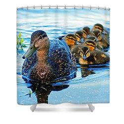Black Duck Brood Shower Curtain