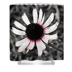 Black Eyed Shower Curtain by Deborah  Crew-Johnson