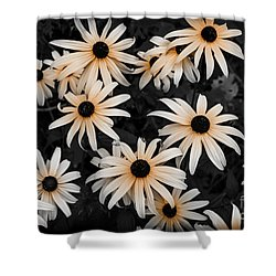 Shower Curtain featuring the photograph Black Eyed Susan by Elena Elisseeva