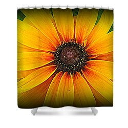 'black Eyed Susan' Shower Curtain