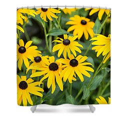 Black-eyed Susan Up Close Shower Curtain